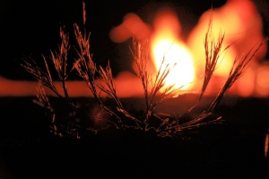 Wildfire brings both life and death to the prairie.