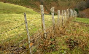 Miles and miles of barbed wire partitioned off farmland and blocked the trail routes for cowboys