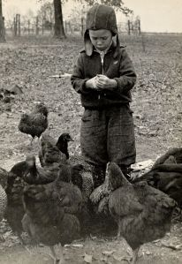 Feeding the chickens was an obvious chore for even the smallest of children
