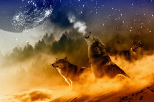 Wolves and moonlight - an inseparable image