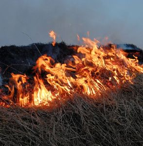 Setting fire to the whole prairie is a bit extreme but it was one way of communicating